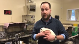 How did Kitsap Humane Society end up with 250 bunnies in a single rescue? Host Christian Vosler takes a look at that story and more on this week's Beat Blast.