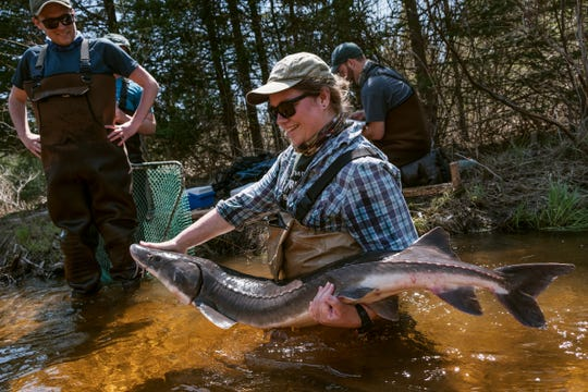 """Michigan State University student Shaley Valentine holds a sturgeon up to show a group of sturgeon guard volunteers gathered on the riverbank in Onaway. """"Sturgeon Camp"""" is playing as part of """"Birds, Bees, Trees and Sturgeon"""" at Freep Film Festival 2019."""