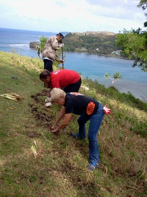 In this file photo, volunteers help plant vetiver near Fort Soledad. Vetiver reduces surface water runoff and erosion, and can also reduce the damage caused by wild fires.