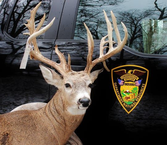 This is the 20-point buck with more than 200 inches of antler that the DNR says 56-year-old Mark Gill killed illegally. Gill had the deer mounted.