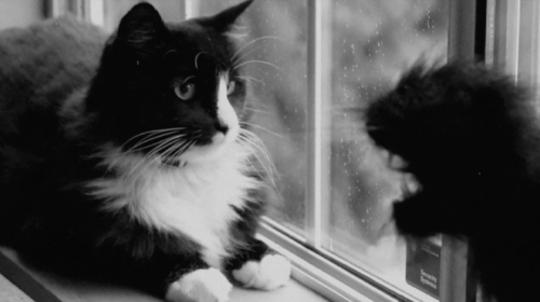 Henri a.k.a. Le Chat Noir