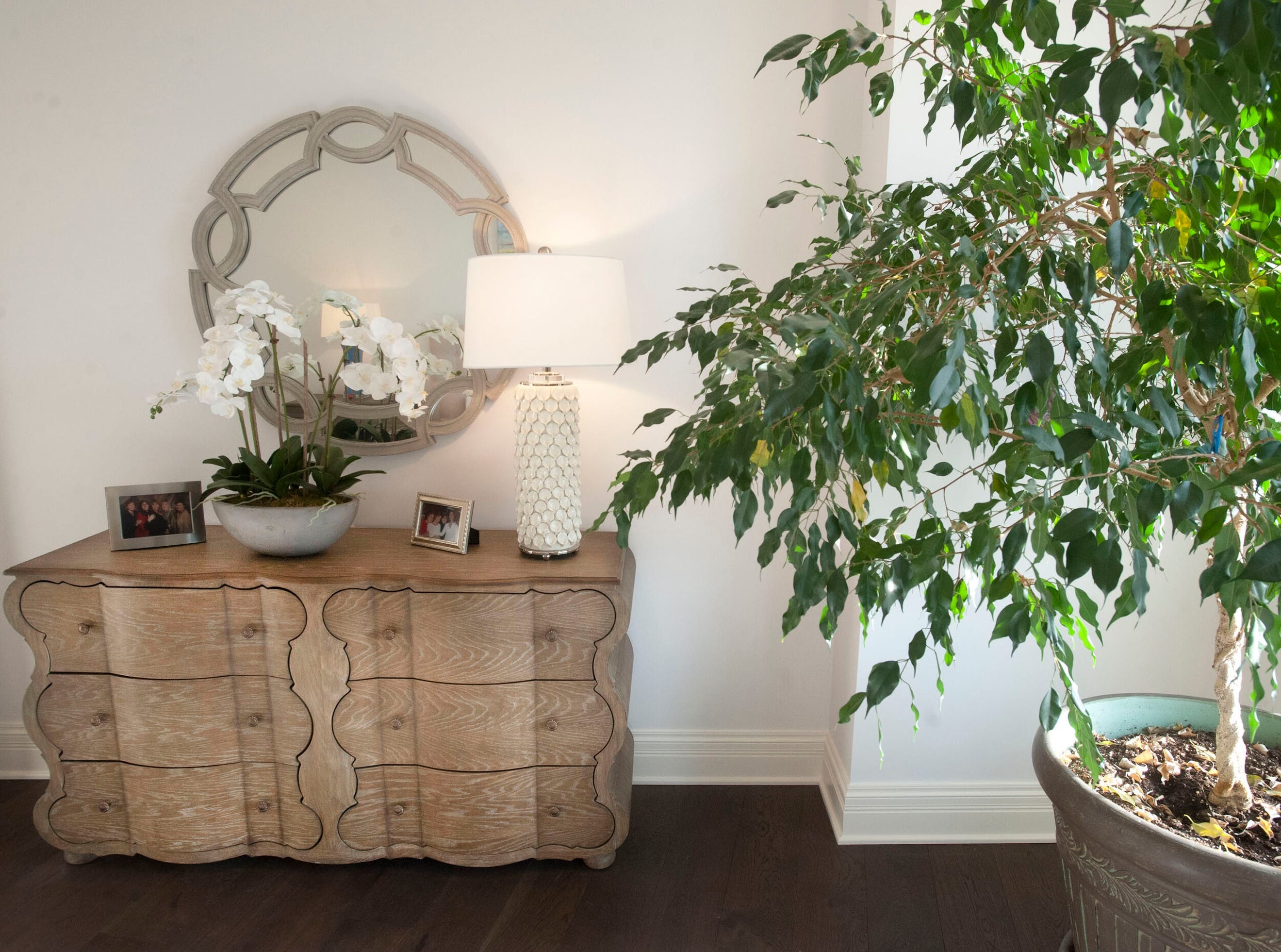 The master bedroom of Denise Puthuff's condominium. The ficus tree at right wasn't doing so well in Puthuff's office, Brownsboro Dermatology, so her partner, Laura Klein (who brought the tree to the practice,) asked Puthuff to take the tree off her hands. The plant has since flourished in its new location, hit by bright sunlight coming through the window of the master bedroom.