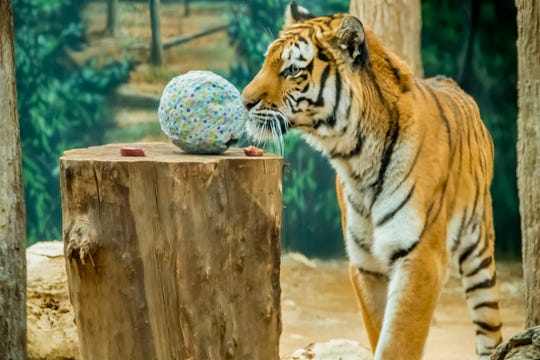 People aren't the only ones who get treats at the zoo on Egg Day.