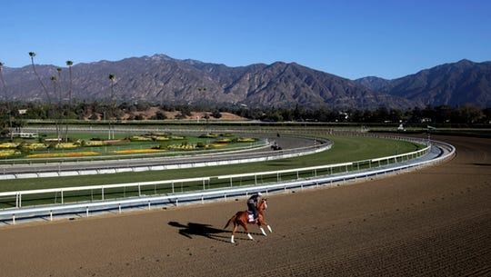 FILE - In this Oct. 30, 2013 file photo, an exercise rider takes a horse for a workout at Santa Anita Park with palm trees and the San Gabriel Mountains as a backdrop in Arcadia, Calif. A person with direct knowledge of the situation says a 21st horse has died at Santa Anita. The person spoke to The Associated Press on the condition of anonymity Tuesday, March 5, 2019, because the fatality has not been announced publicly. A total of 21 horses have died since the racetrack's winter meet began on Dec. 26.