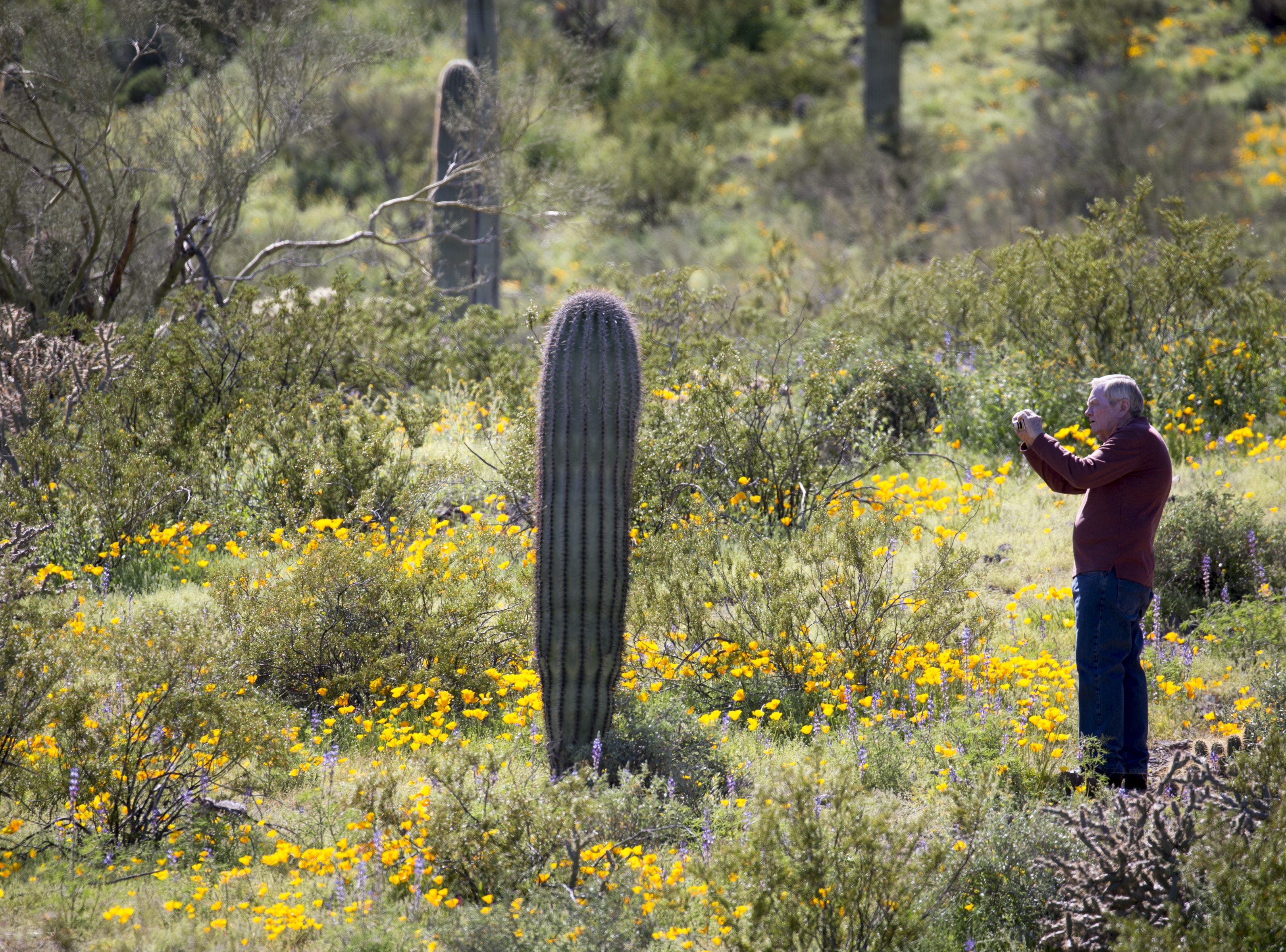 Jim Recer (Tucson) photographs wildflowers, March 5, 2019, at Picacho Peak State Park, Arizona.