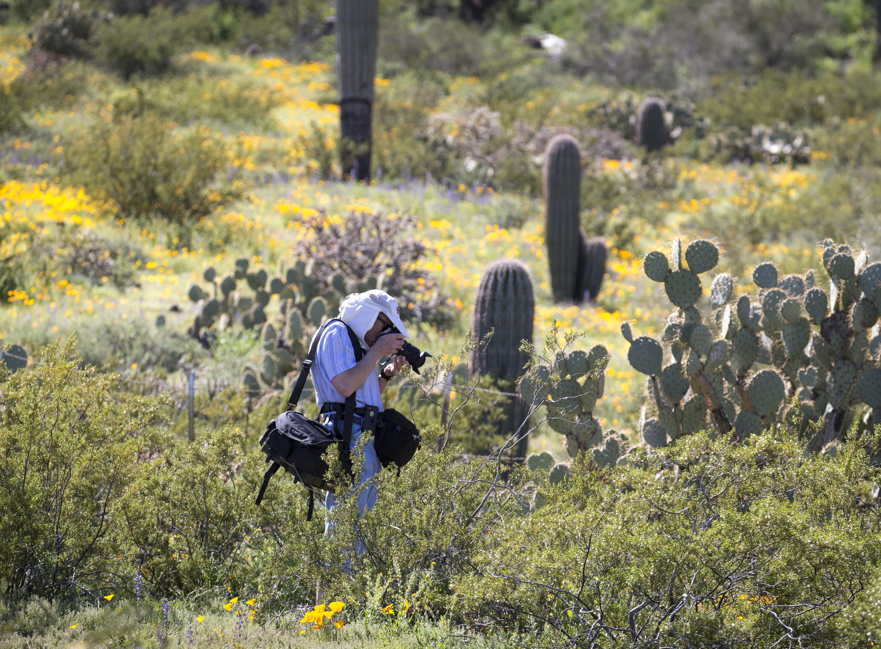 John Gilkey (Tucson) photographs wildflowers, March 5, 2019, at Picacho Peak State Park, Arizona.