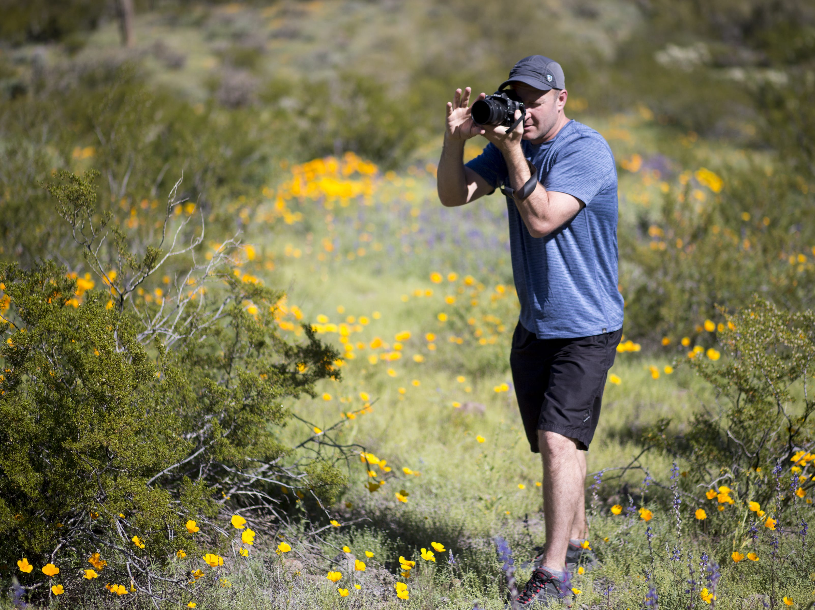 Chris DeVito (Gilbert) photographs wildflowers, March 5, 2019, at Picacho Peak State Park, Arizona.