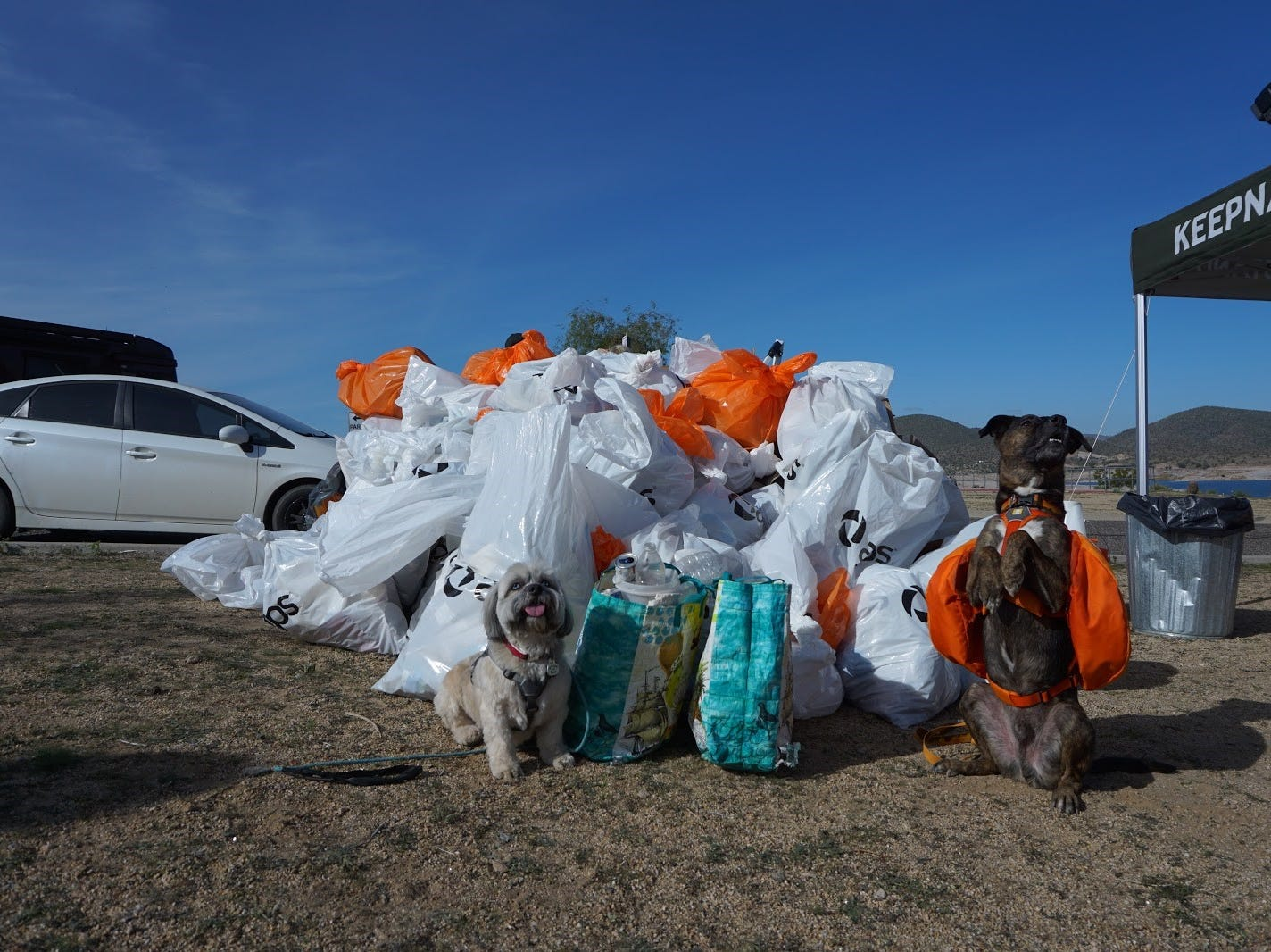 Four-legged volunteers in front of total trash picked up at the end of the cleanup at Lake Pleasant on Nov. 23, 2018.