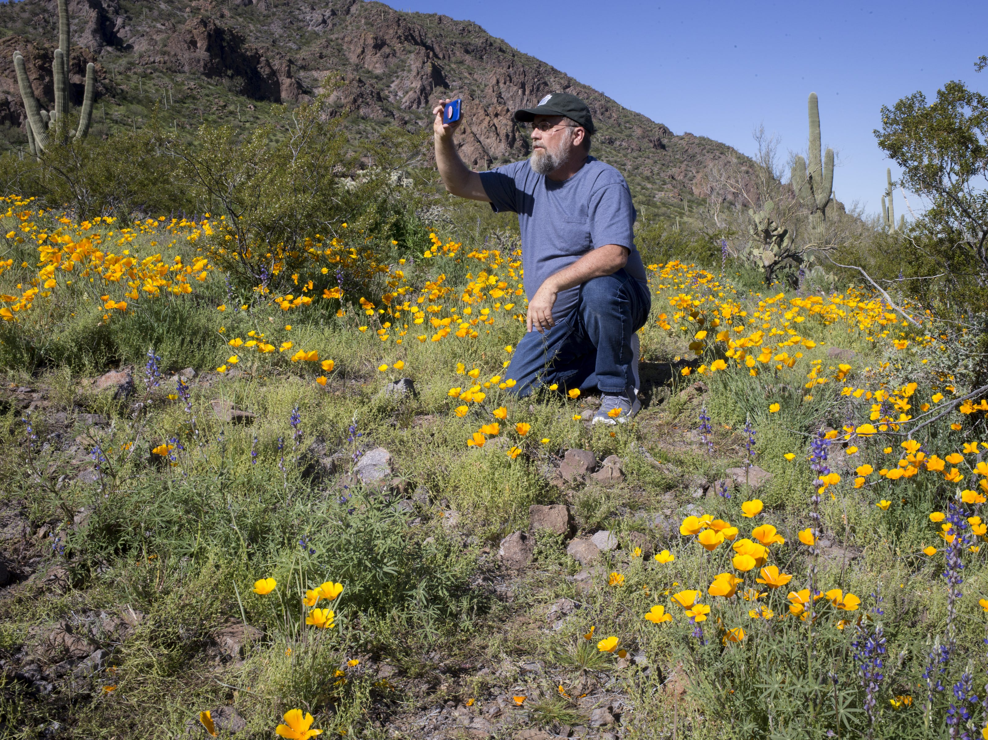 Kevin Dahl (Tucson) photographs wildflowers, March 5, 2019, at Picacho Peak State Park, Arizona.