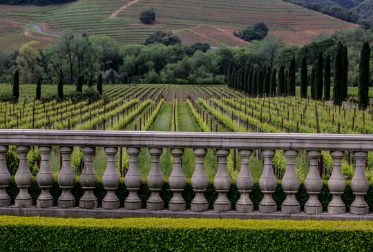 Ranks of malbec and sauvignon blanc stretch toward the pleated foothills of the Coast Range at Ferrari-Carano Vineyards and Winery in Sonoma County.