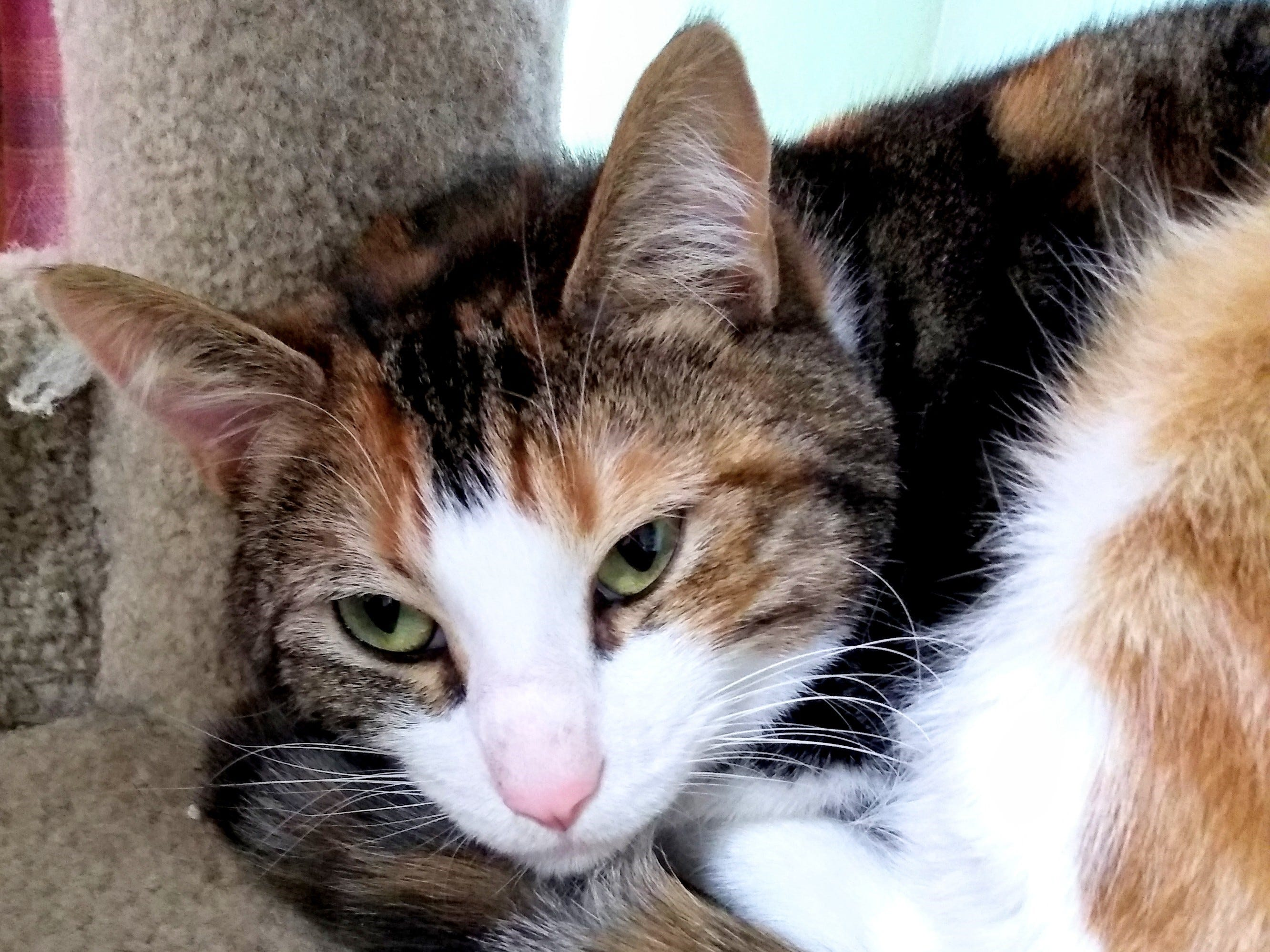 Thelma is 1 year old and is bonded with Gypsy. The pair must be adopted together. Thelma loves to be held – she is a snuggly girl who absolutely loves attention. She is also very friendly and loves people. For more information, visit www.sfof.org or call 503-362-5611.