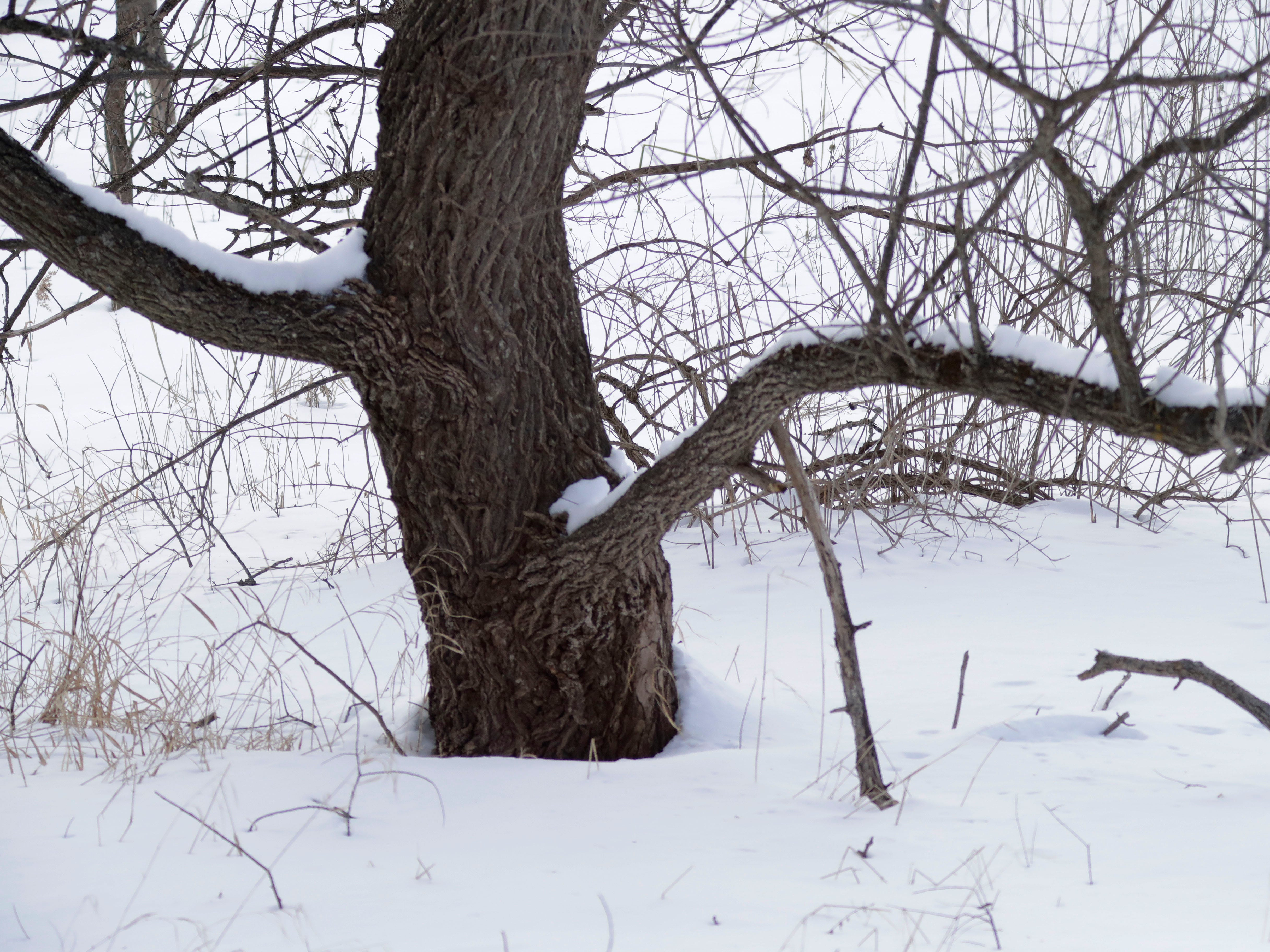 Tree branches fan out in contrast to the snow at Ellwood H. May Environmental Park, Tuesday, March 5, 2019, in Sheboygan, Wis.