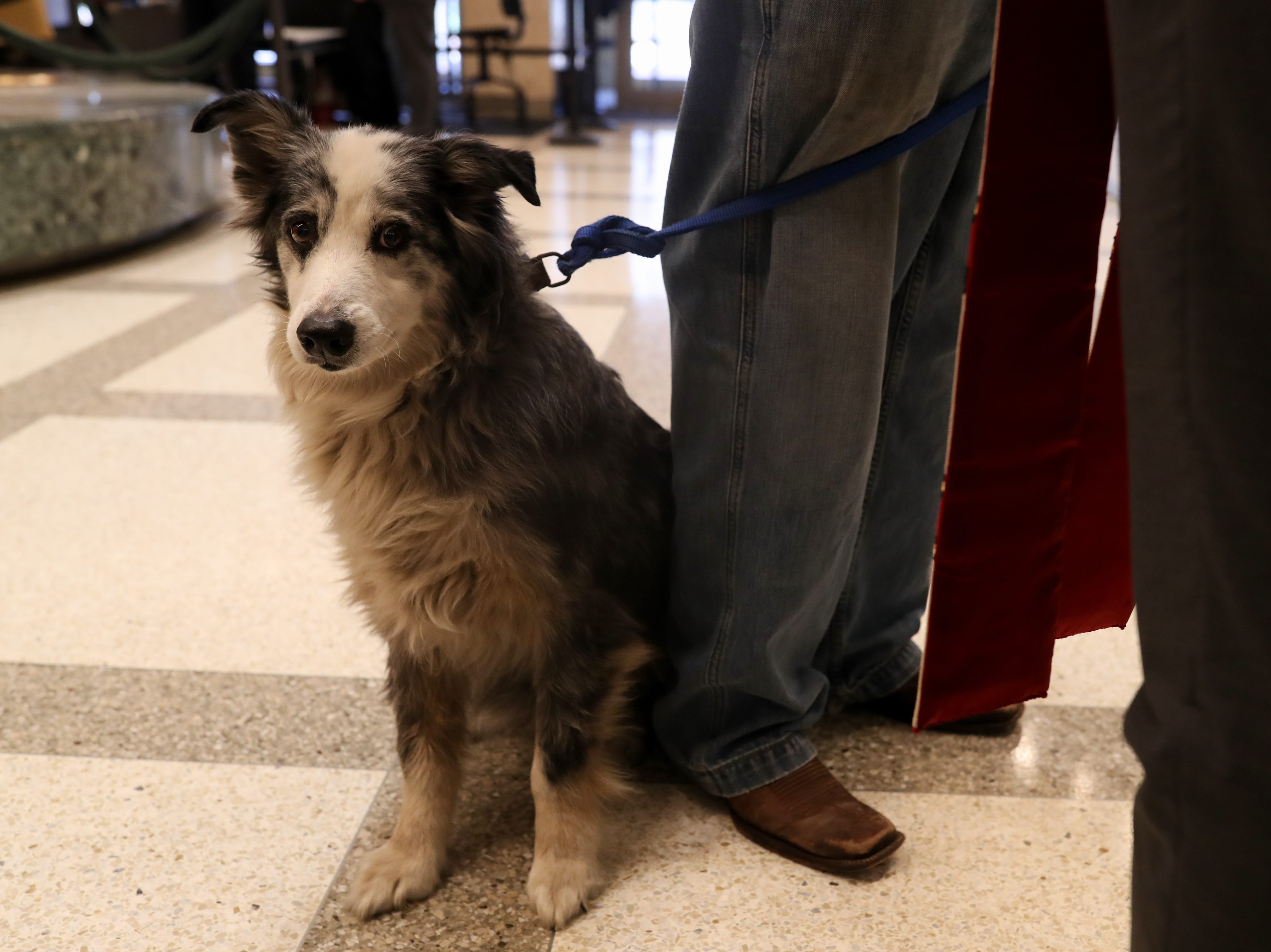 Koda the Australian Shepherd waits as his owner, Bruce Borders, prays with Rev. David Killeen of St. John's Episcopal Church who stood in the Florida Capitol rotunda placing ashes on the foreheads of busy passersby on Ash Wednesday, March 6, 3019.