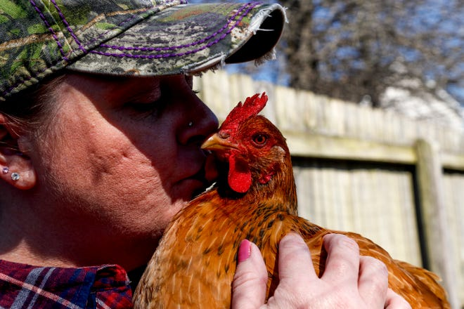 Shawna Lund kisses one of her oldest hens while visiting her flock she keeps in a fenced area in her backyard in Clarksville, Tenn., on March 6, 2019.