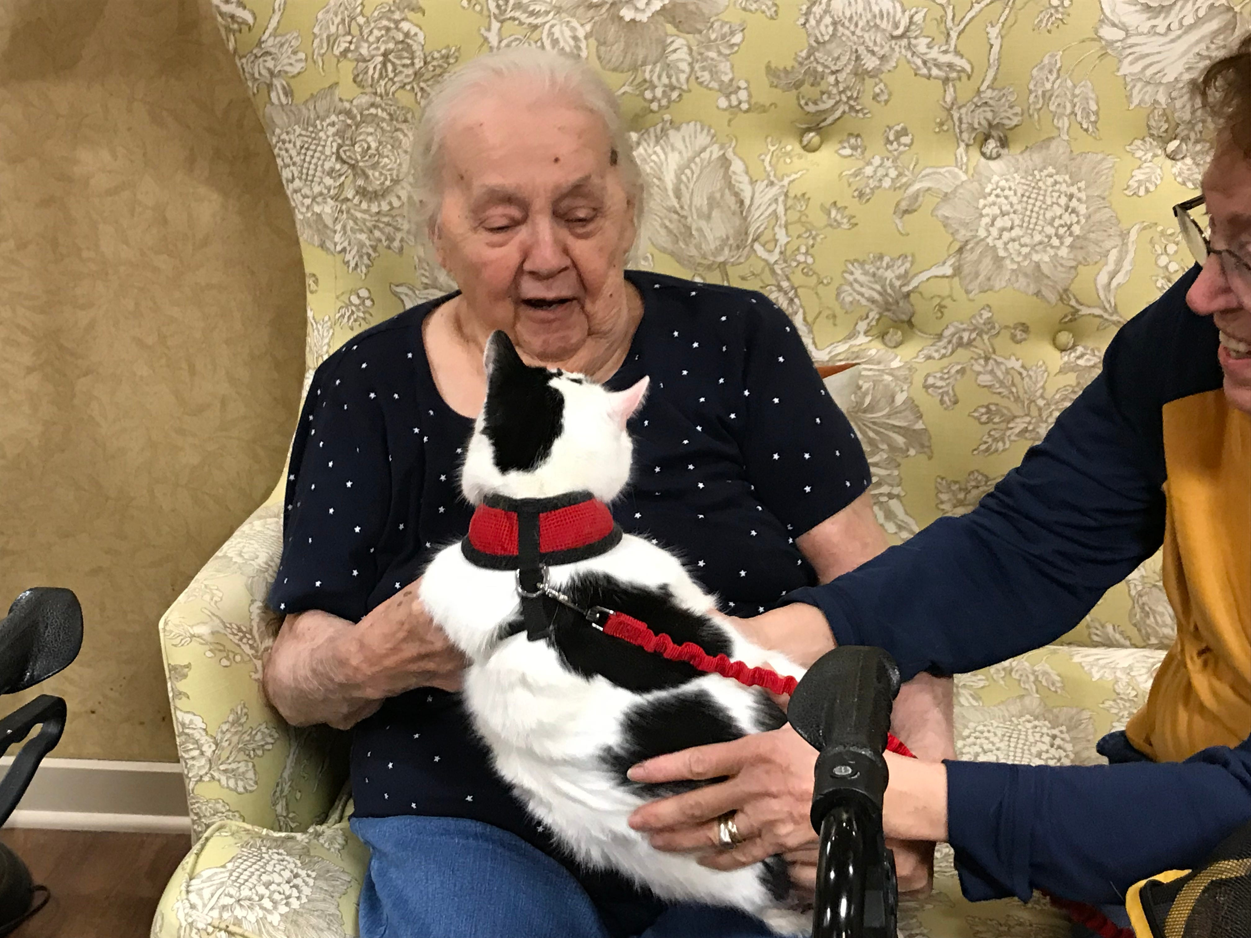 """Gloria Omstead, a resident of Independence Manor in Flemington,  was thrilled to visit with five-year-old Rose. A frequent guest to Independence Manor in Flemington and a few other local nursing homes,Rose belongs to a special traveling troupe of cats — all a part of """"Aged to Purrfection,""""a new pet therapy program from Tabby's Place, a cat sanctuary in Flemington."""