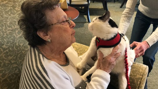 """Edith Gittleman, a resident of Independence Manor in Flemington gives five-year-old Rose a cuddle. A frequent guest to Independence Manor and a few other local nursing homes, Rose belongs to a special traveling troupe of cats — all a part of """"Aged to Purrfection,""""a new pet therapy program from Tabby's Place, a cat sanctuary in Flemington."""