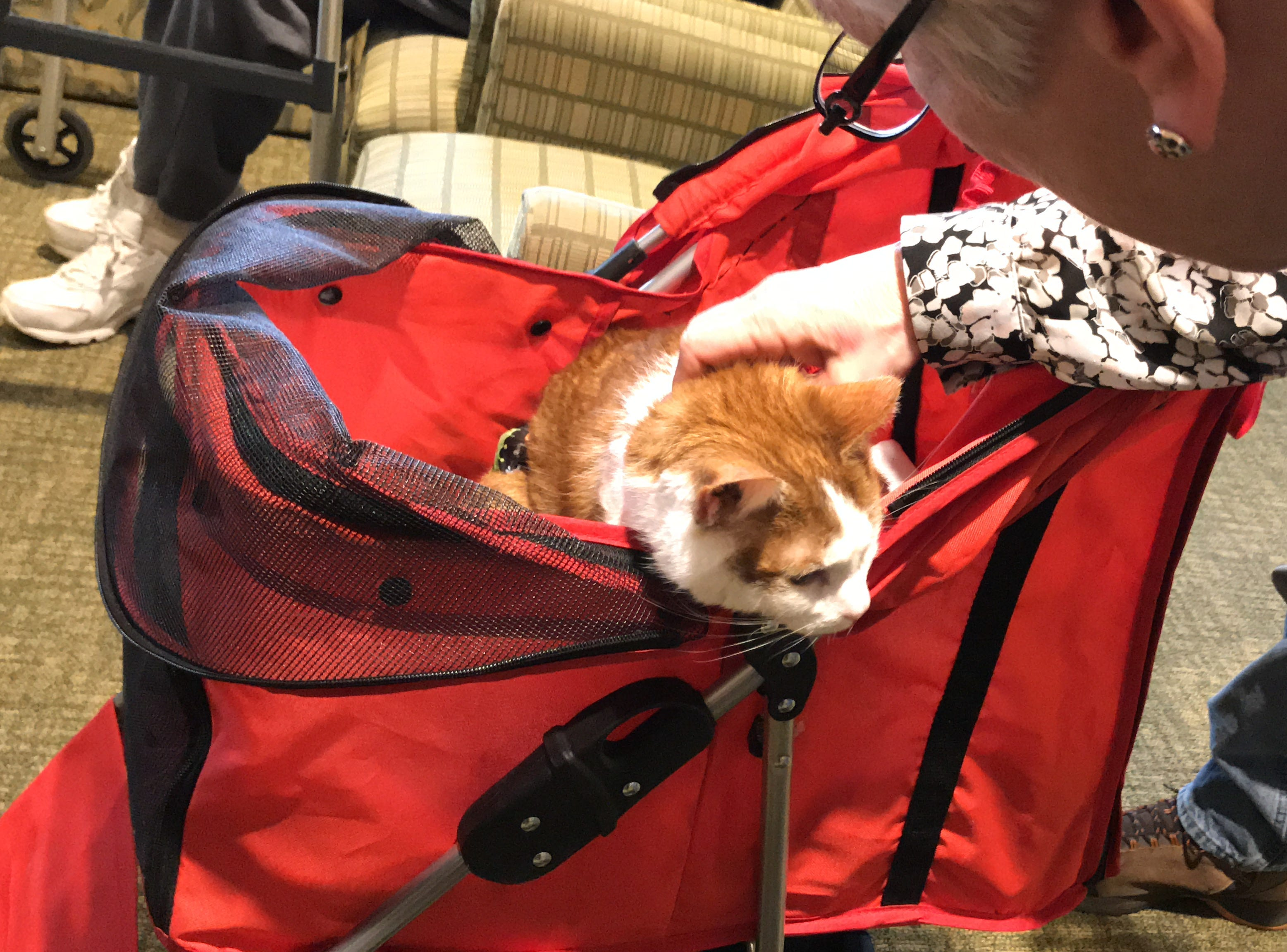 """A frequent guest to Independence Manor in Flemington and a few other local nursing homes, Carrot belongs to a special traveling troupe of cats — all a part of """"Aged to Purrfection,"""" a new pet therapy program from Tabby's Place, a cat sanctuary in Flemington."""