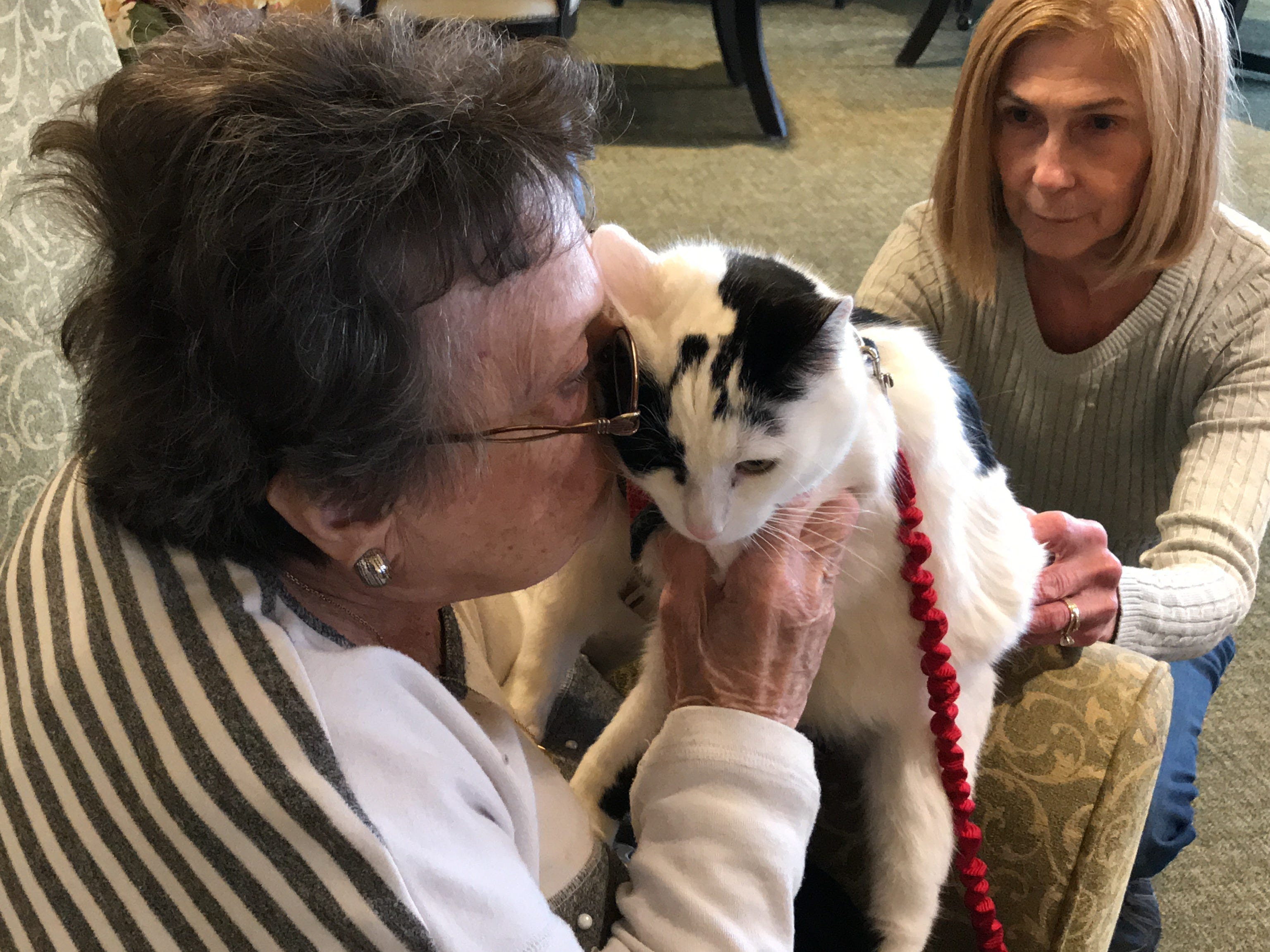 """Edith Gittleman, a resident at Independence Manor in Flemington, gives five-year-old Rose a kiss. A frequent guest to Independence Manor in Flemington and a few other local nursing homes, Rose belongs to a special traveling troupe of cats — all a part of """"Aged to Purrfection,""""a new pet therapy program from Tabby's Place, a cat sanctuary in Flemington."""