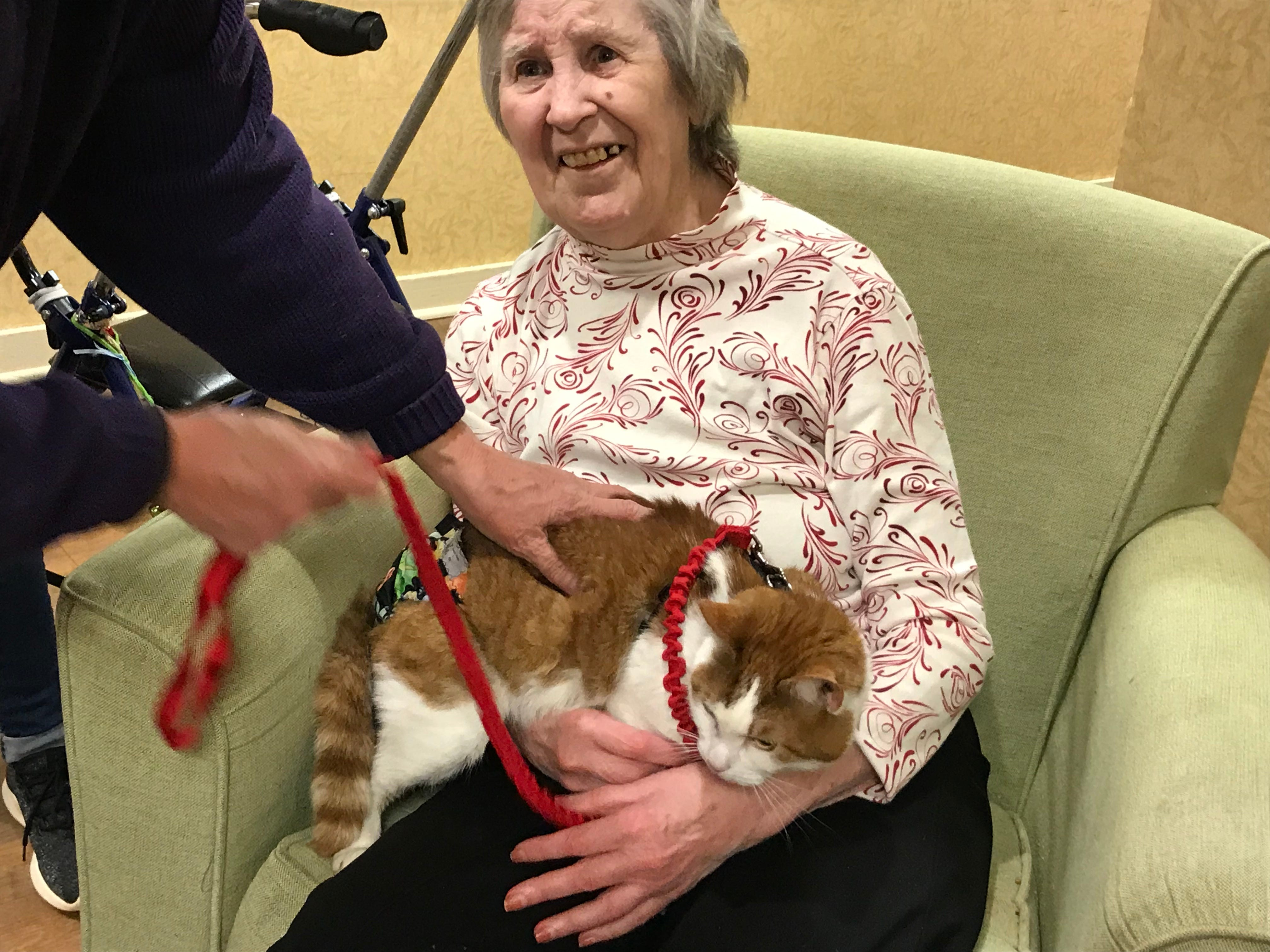 """Dorothy Groh, a resident of Independence Manor in Flemington, was all smiles during a visit from four-year-old Carrot. A frequent guest to Independence Manor in Flemington and a few other local nursing homes, Carrot belongs to a special traveling troupe of cats — all a part of """"Aged to Purrfection,""""a new pet therapy program from Tabby's Place, a cat sanctuary in Flemington."""