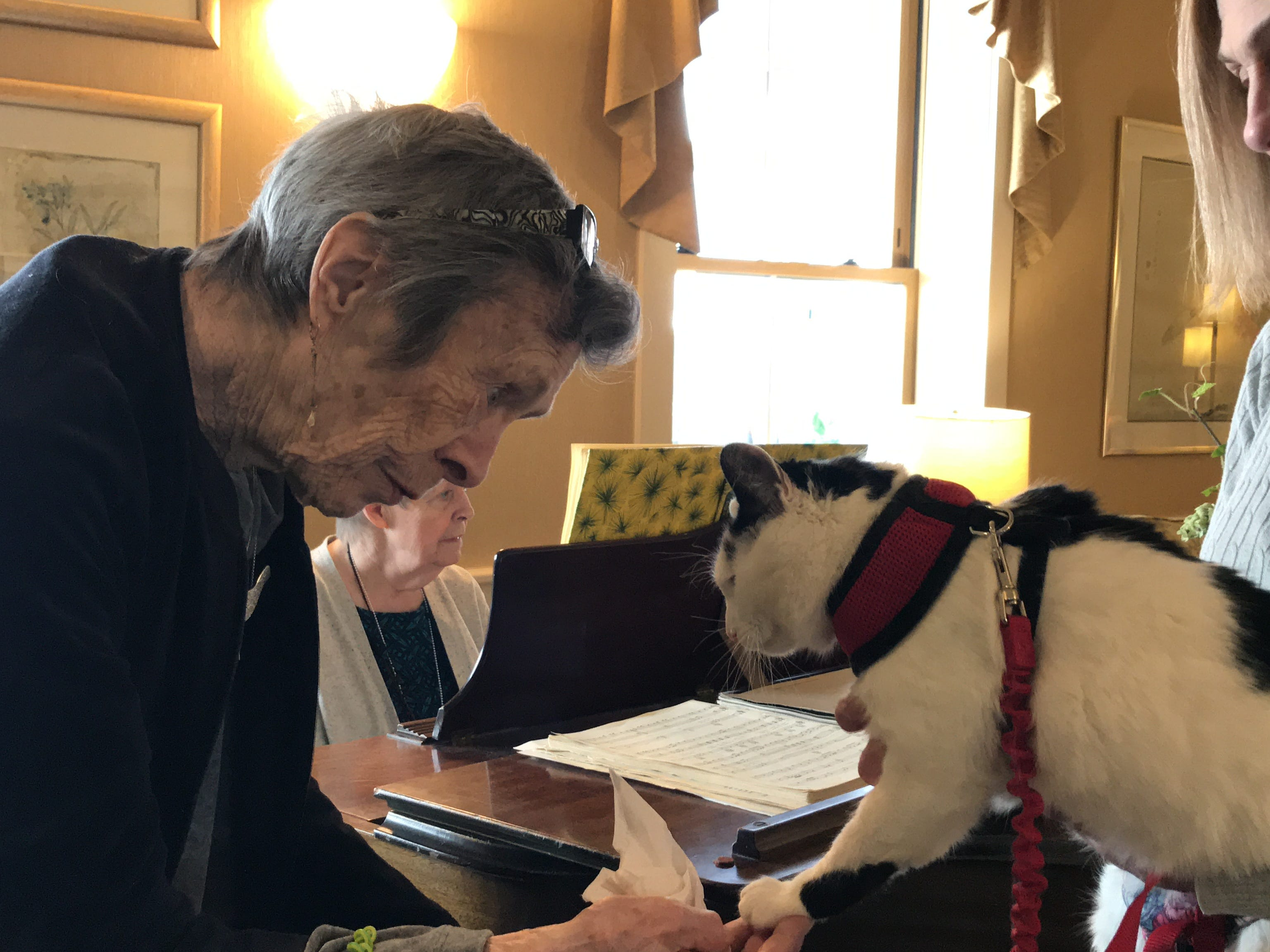"""A frequent guest to Independence Manor in Flemington and a few other local nursing homes, Rose belongs to a special traveling troupe of cats — all a part of """"Aged to Purrfection,""""a new pet therapy program from Tabby's Place, a cat sanctuary in Flemington."""