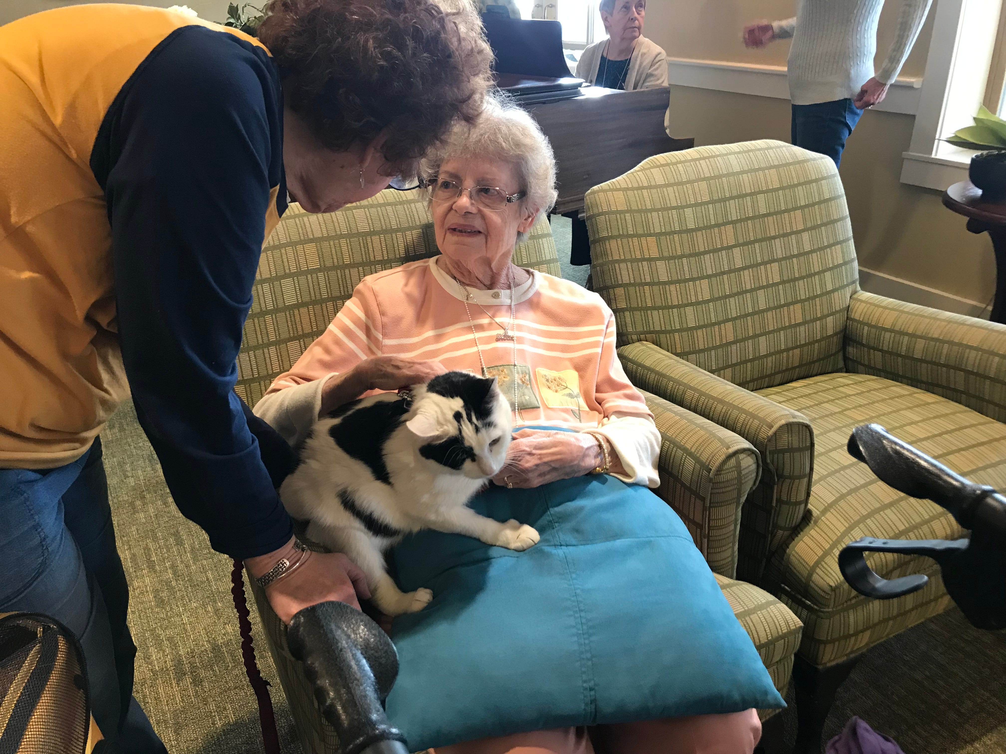 """Eleanor Finke visits with five-year-old Rose. A frequent guest to Independence Manor in Flemington and a few other local nursing homes, Rose belongs to a special traveling troupe of cats — all a part of """"Aged to Purrfection,"""" a new pet therapy program from Tabby's Place, a cat sanctuary in Flemington."""