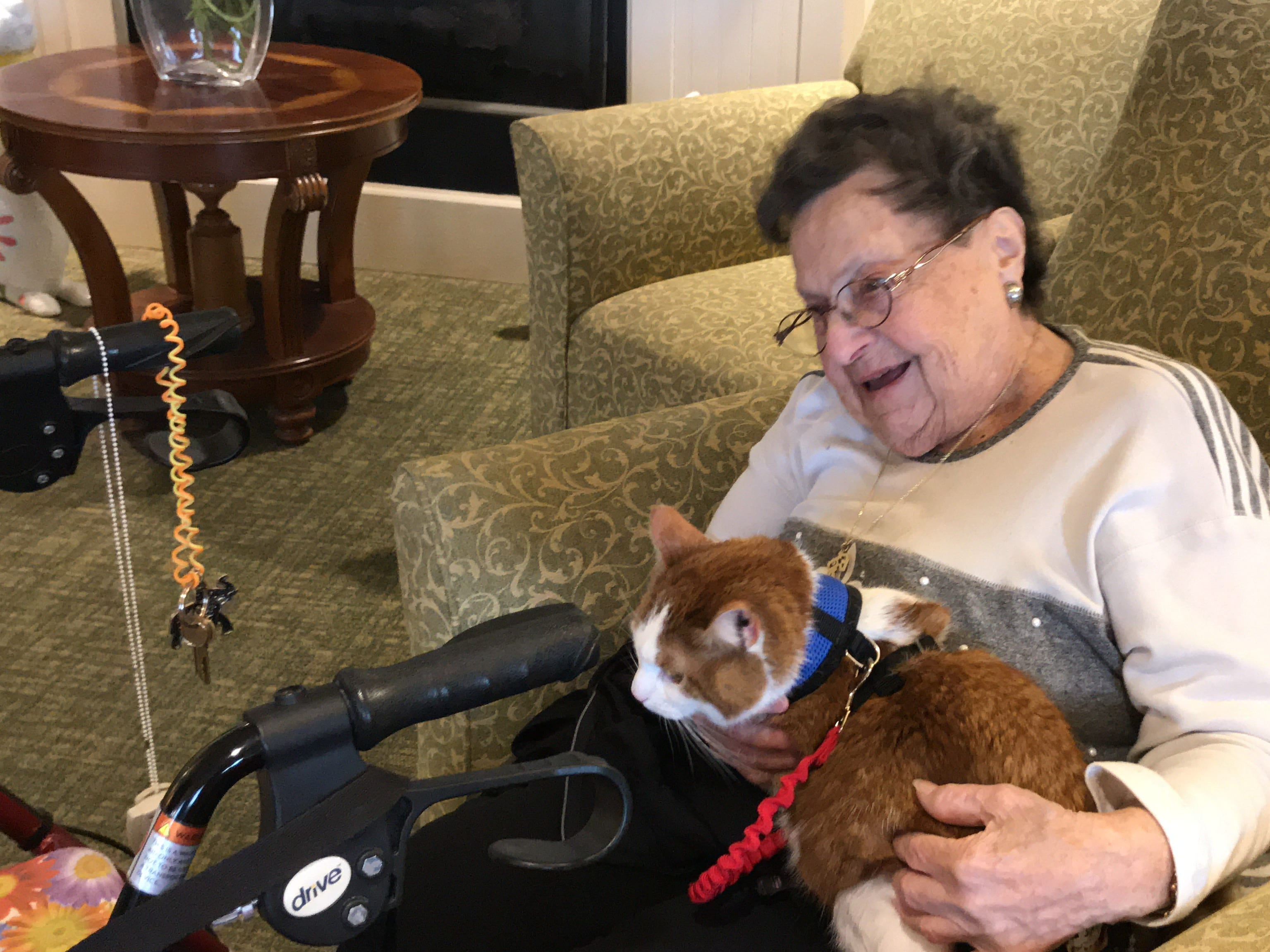 """Edith Gittleman, a resident of Independence Manor in Flemington, is happy with four-year-old Carrot on her lap. A frequent guest to Independence Manor in Flemington and a few other local nursing homes, Carrot belongs to a special traveling troupe of cats — all a part of """"Aged to Purrfection,""""a new pet therapy program from Tabby's Place, a cat sanctuary in Flemington."""