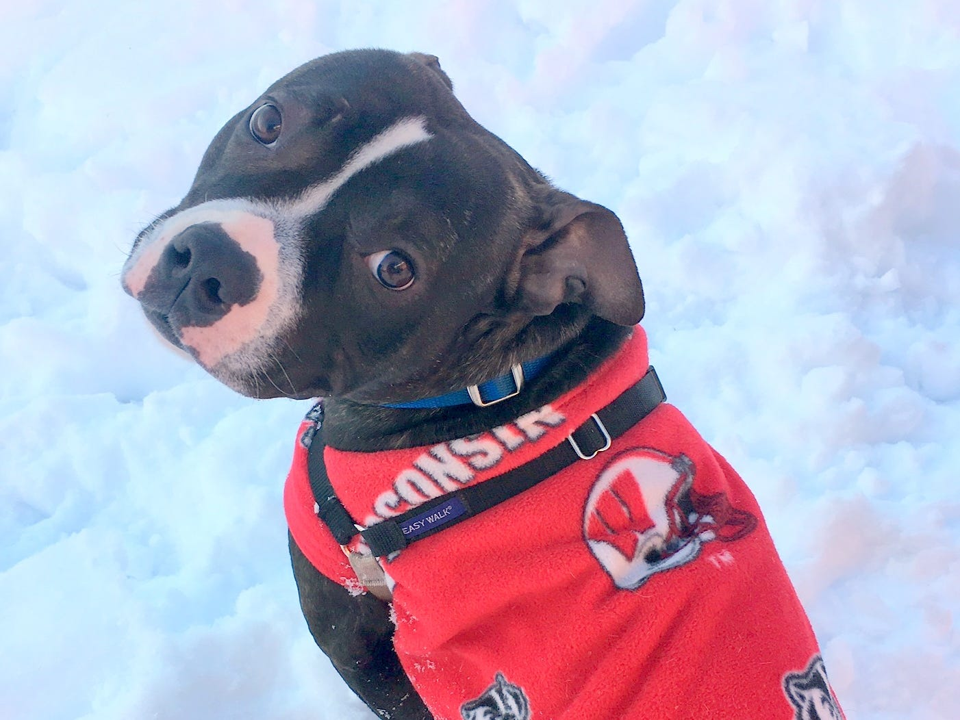 A 2-year-old mixed breed, Natasha loves other dogs and toys. She is spayed.