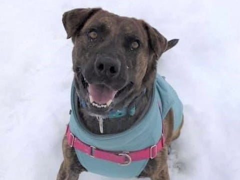 Baxter, a 3-year-old mixed breed, is happy and energetic. He enjoys toys, walks and kisses and is neutered.