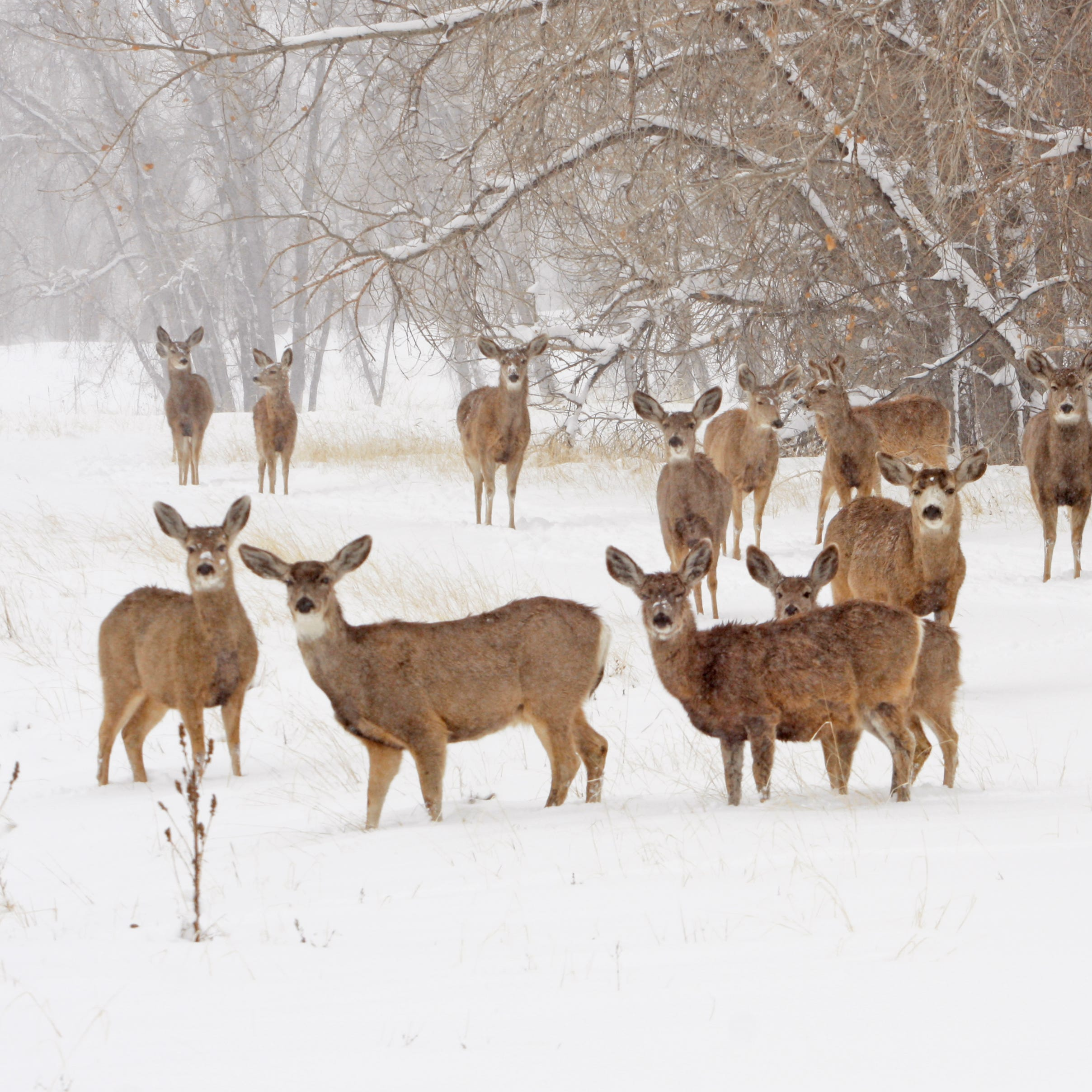 As winter slowly ends, a look at animal survival tactics