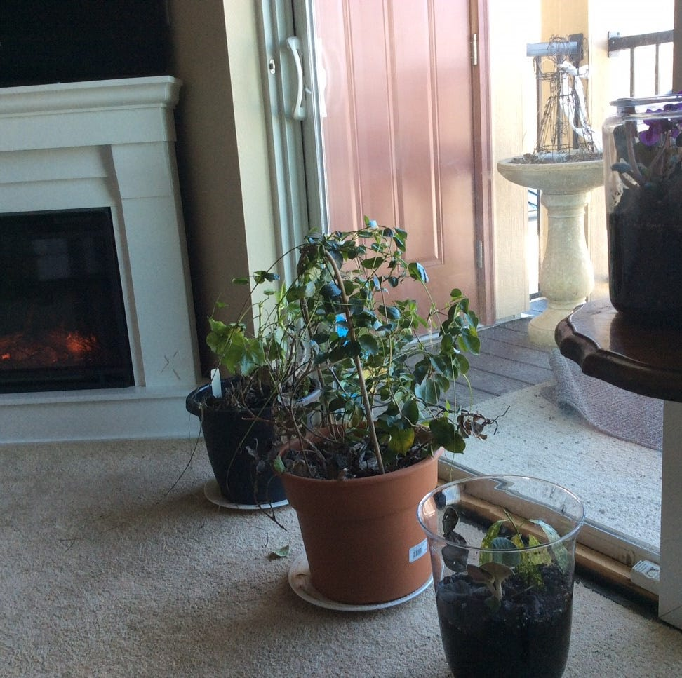Houseplants can thrive even when you're out of town