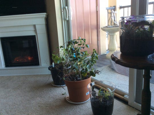 The plastic wrapped worked to keep Judy's houseplants green and thriving while she was out of town.