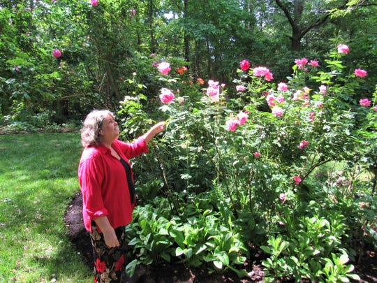 Expert gardener Mary Bates tends to roses in her garden. She has over 100 varieties of hybrid tea roses and floribunda.