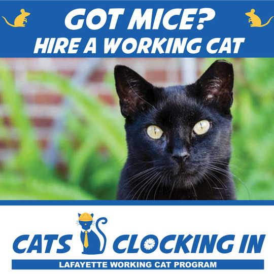 Cats Clocking In
