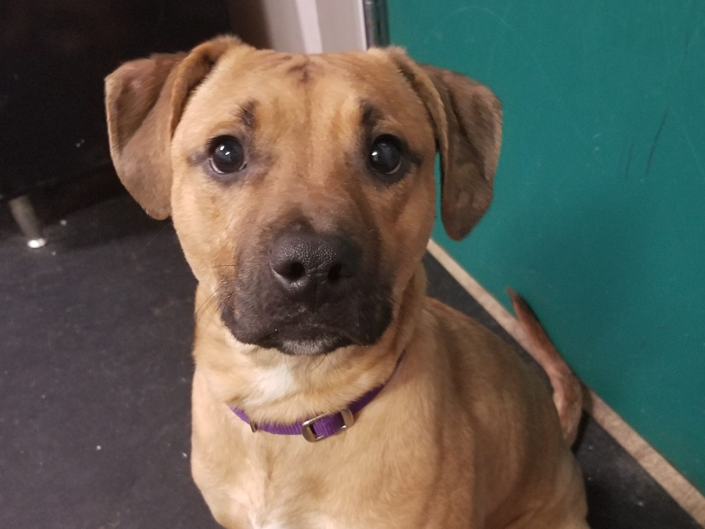 Cosmo, a 10-month-old mixed breed, is goofy and wiggly. He is neutered.