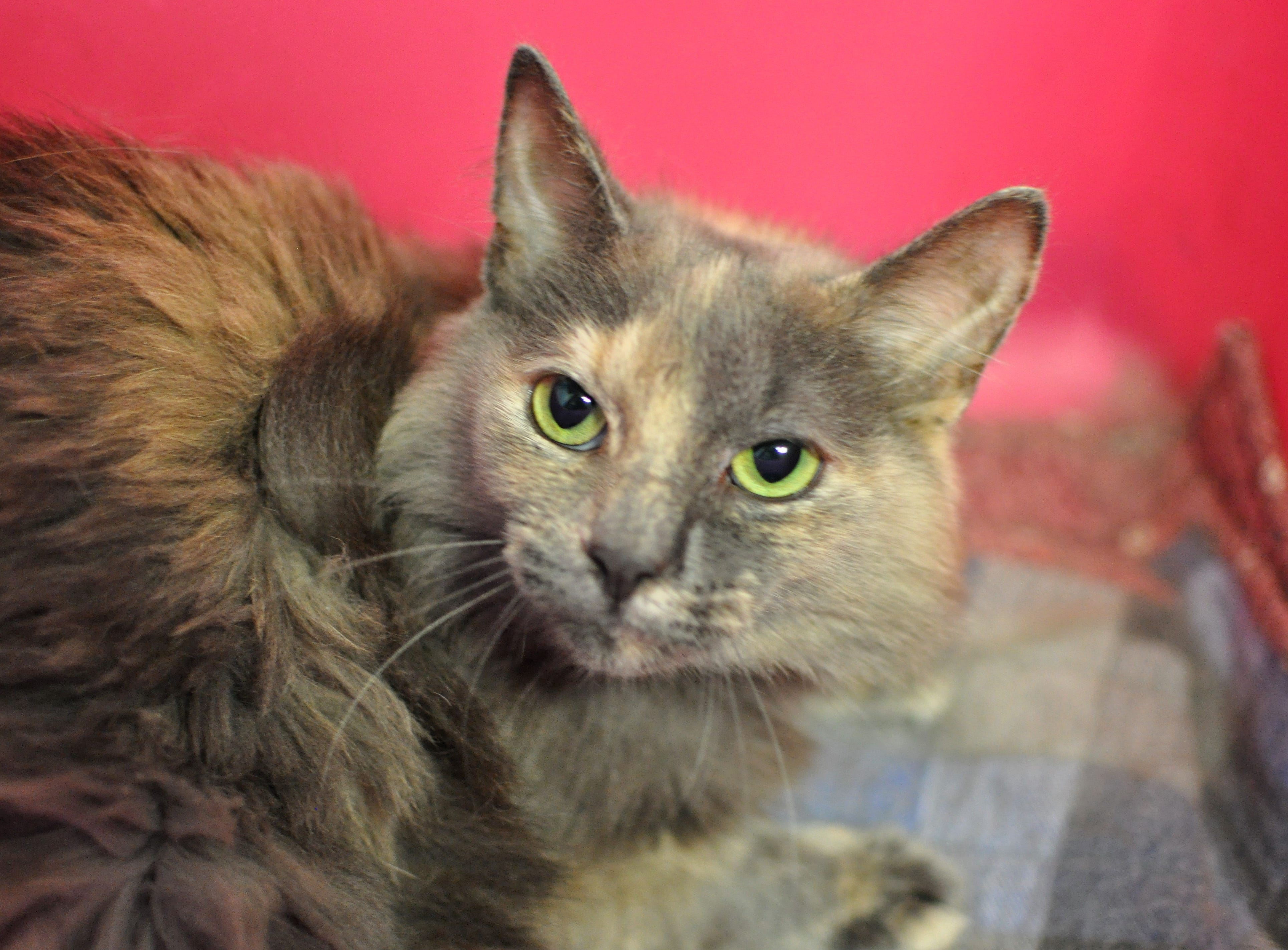 Summer, 6, is shy at first but loves attention. She is spayed.
