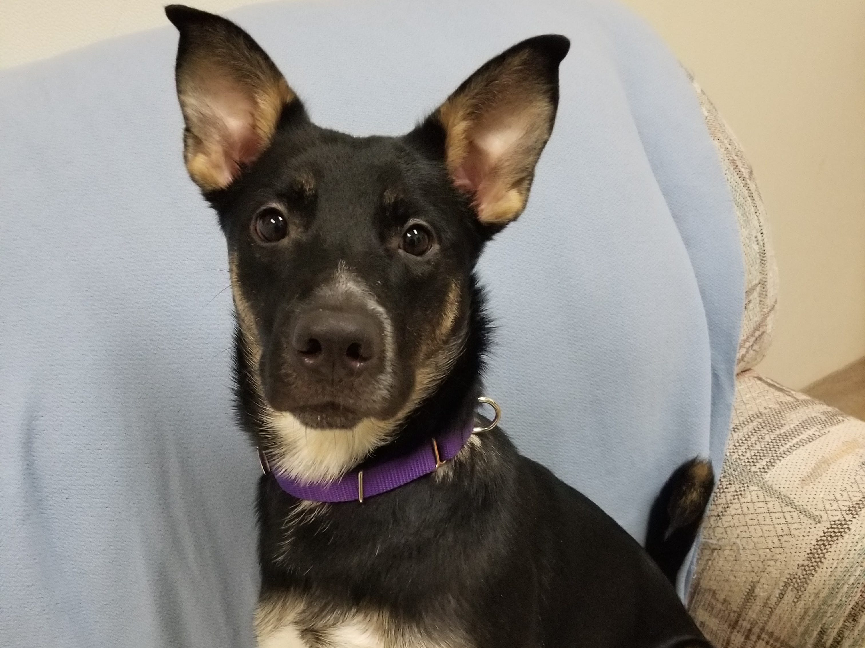 Nikita, a 1-year-old mixed breed, is smart, fun and affectionate. She knows some tricks and is spayed.