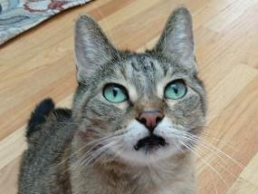 Gertie, 3, is sweet and wants your attention. She is spayed.