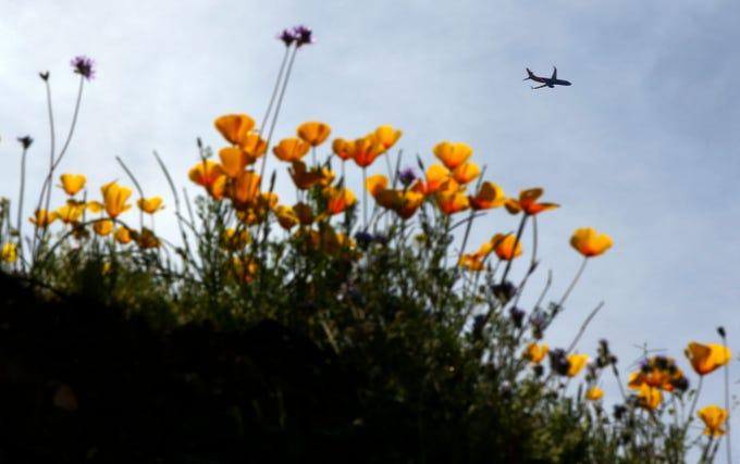 Best Instagram-worthy spring flower spots, from California to Japan