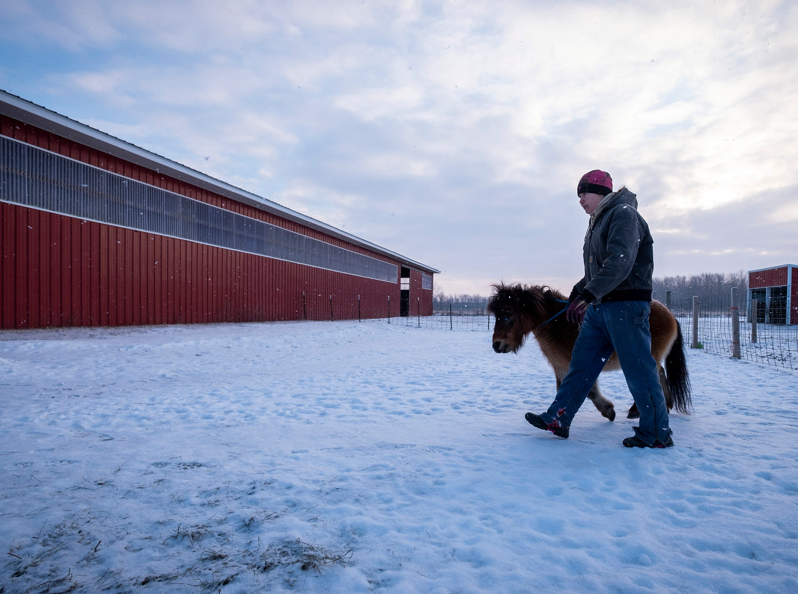 "Tammie Miller leads Louie, a 16-year-old miniature horse from the pasture into the barn at her rescue farm in Emmett. Louie began going blind when he was seven after forming cataracts in his eyes. ""Louie does really good,"" Miller said about his ability to adapt to any pasture. ""He's always with some buddies."""