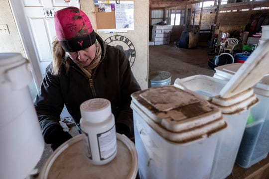Many of the miniature horses at Miller's farm take special medications and supplements, which she mixes into the grain the horses are fed twice a day.
