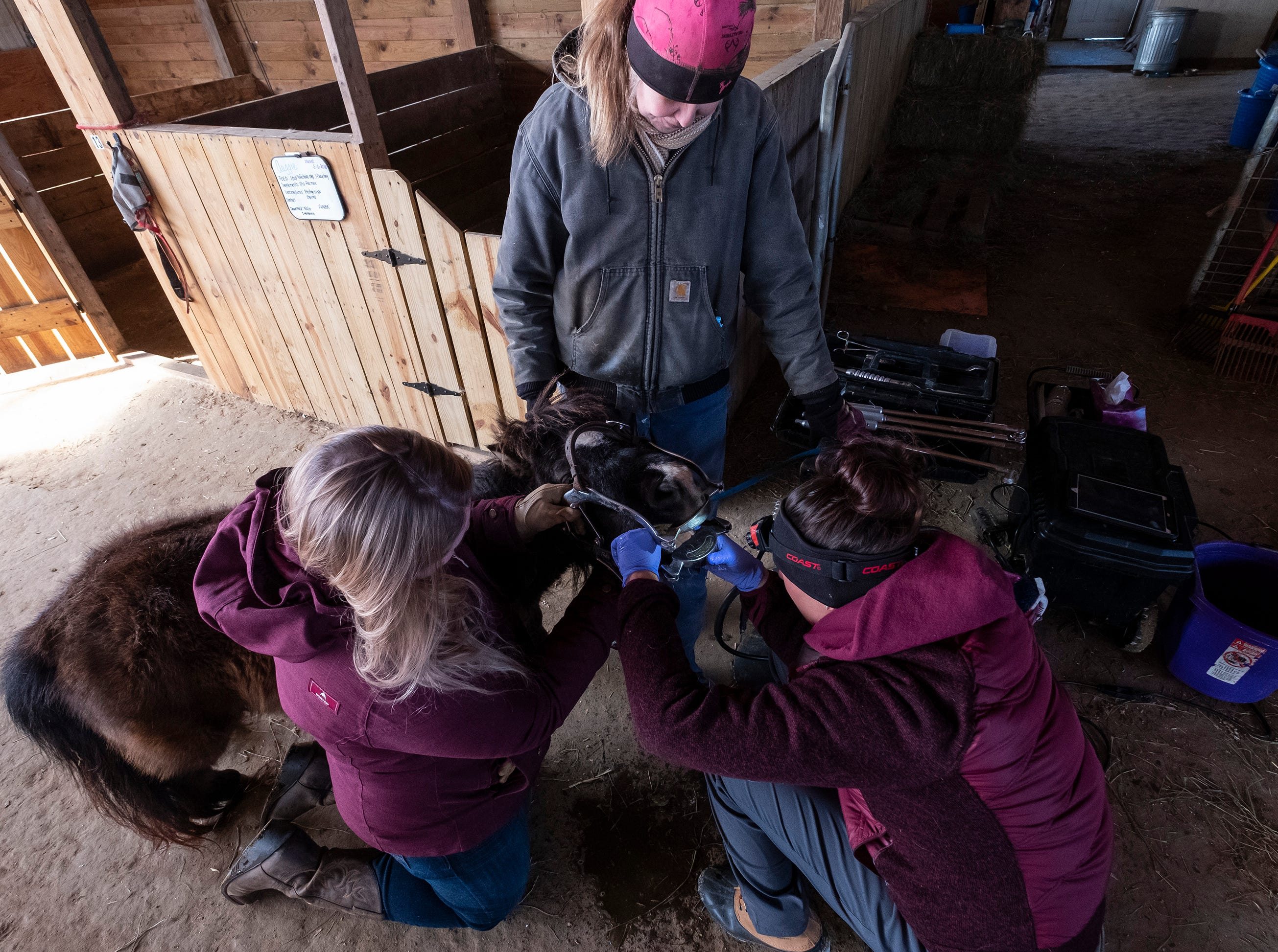 After a speculum is inserted into Priya's mouth, Equine Dental Technician Natalie Hillman, right, examines her mouth while Hillman's assistant Halley Schwab, left, and Tammie Miller hold her.
