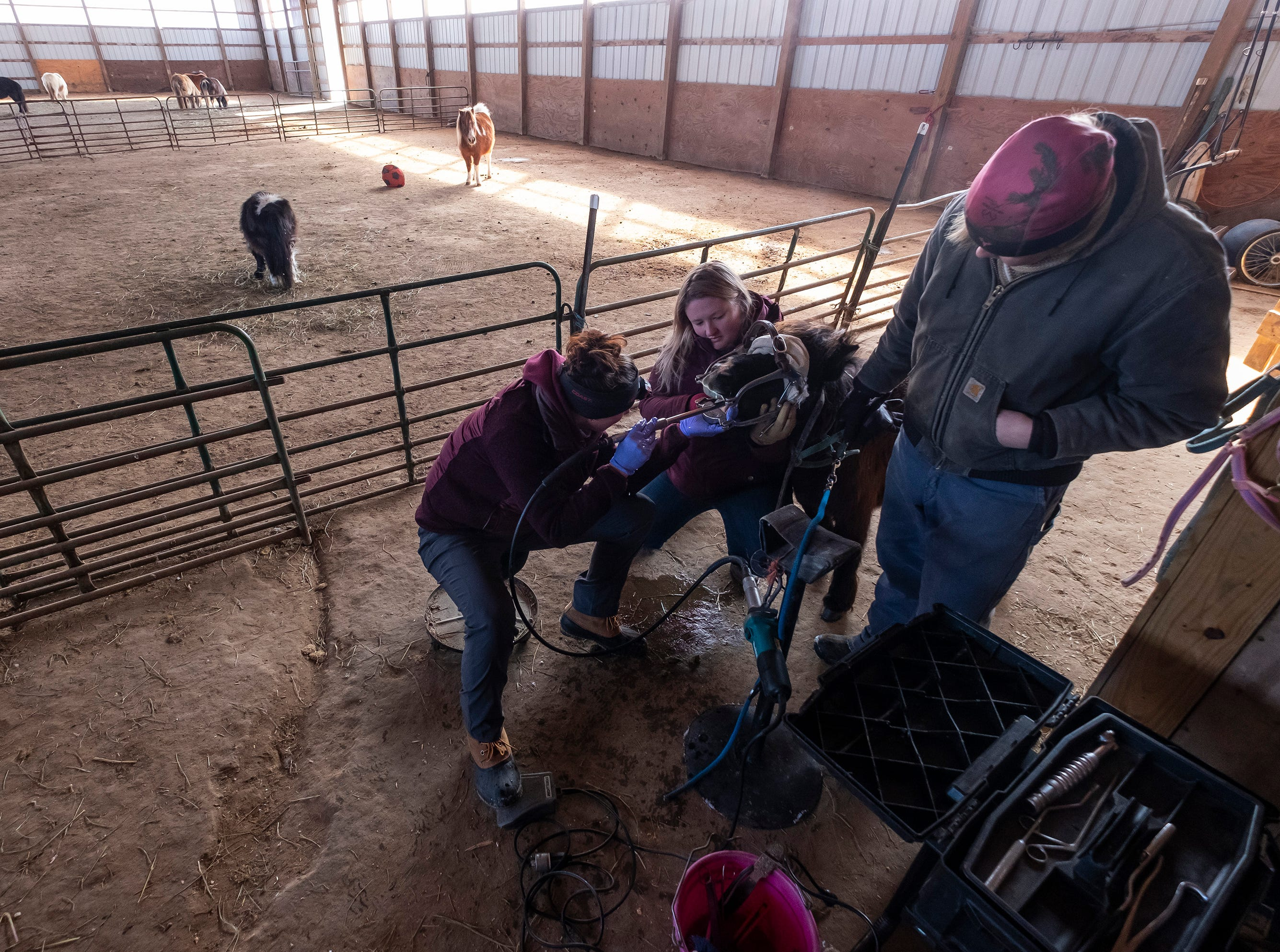 Great Lakes Equine Dentistry owner and technician Natalie Hillman, left, uses a diamond-grit file to reduce the sharp points on Priya's teeth. A horse's teeth never stop growing and need regular attention to keep sharp points from forming and causing more serious problems.