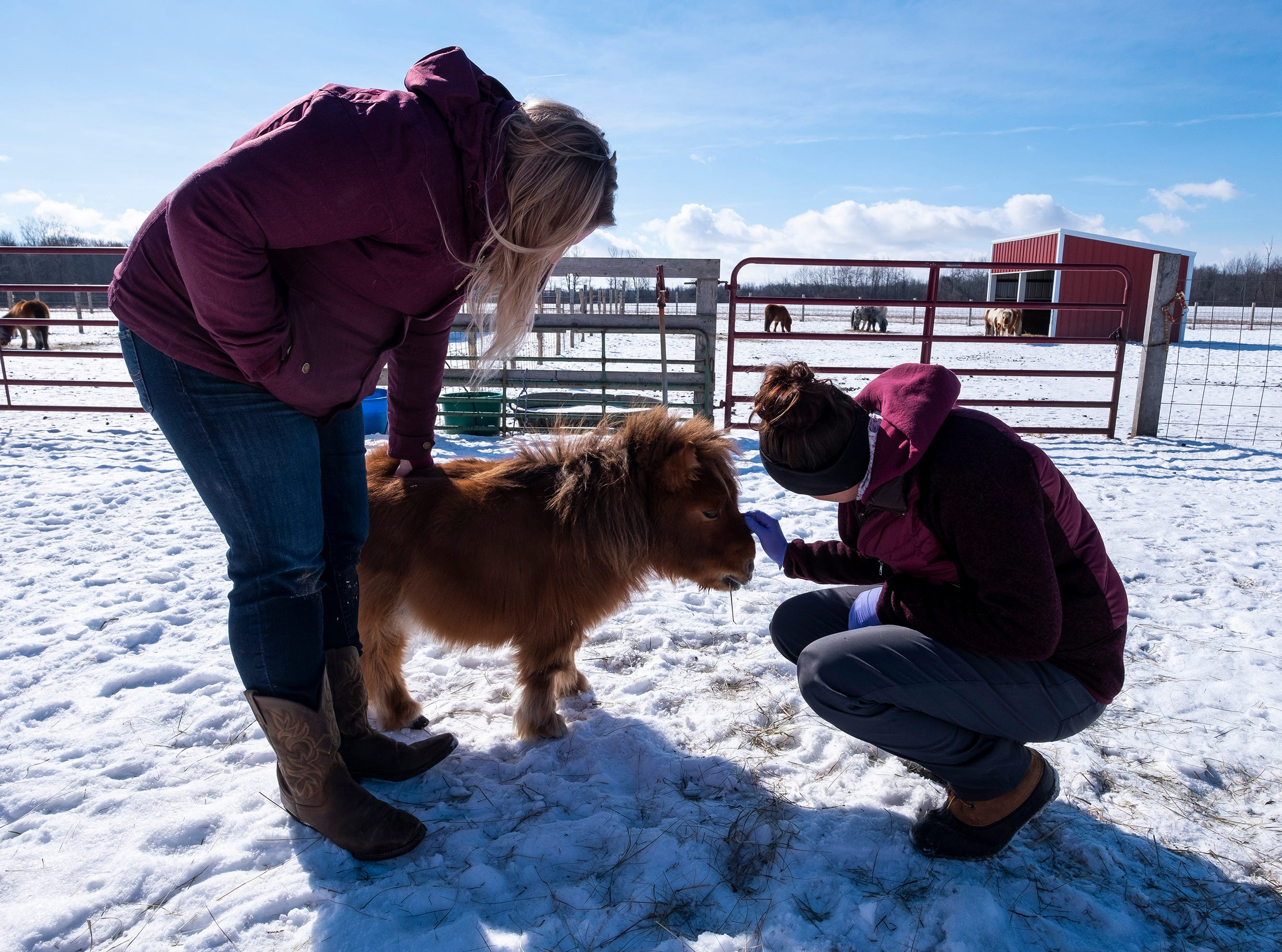Before leaving for the day, Equine Dental Technician Natalie Hillman, owner of Great Lakes Equine Dentistry, right, and her assistant, Halley Schwab, take a minute to give Bam Bam some affection in one of the fields outside the barn.