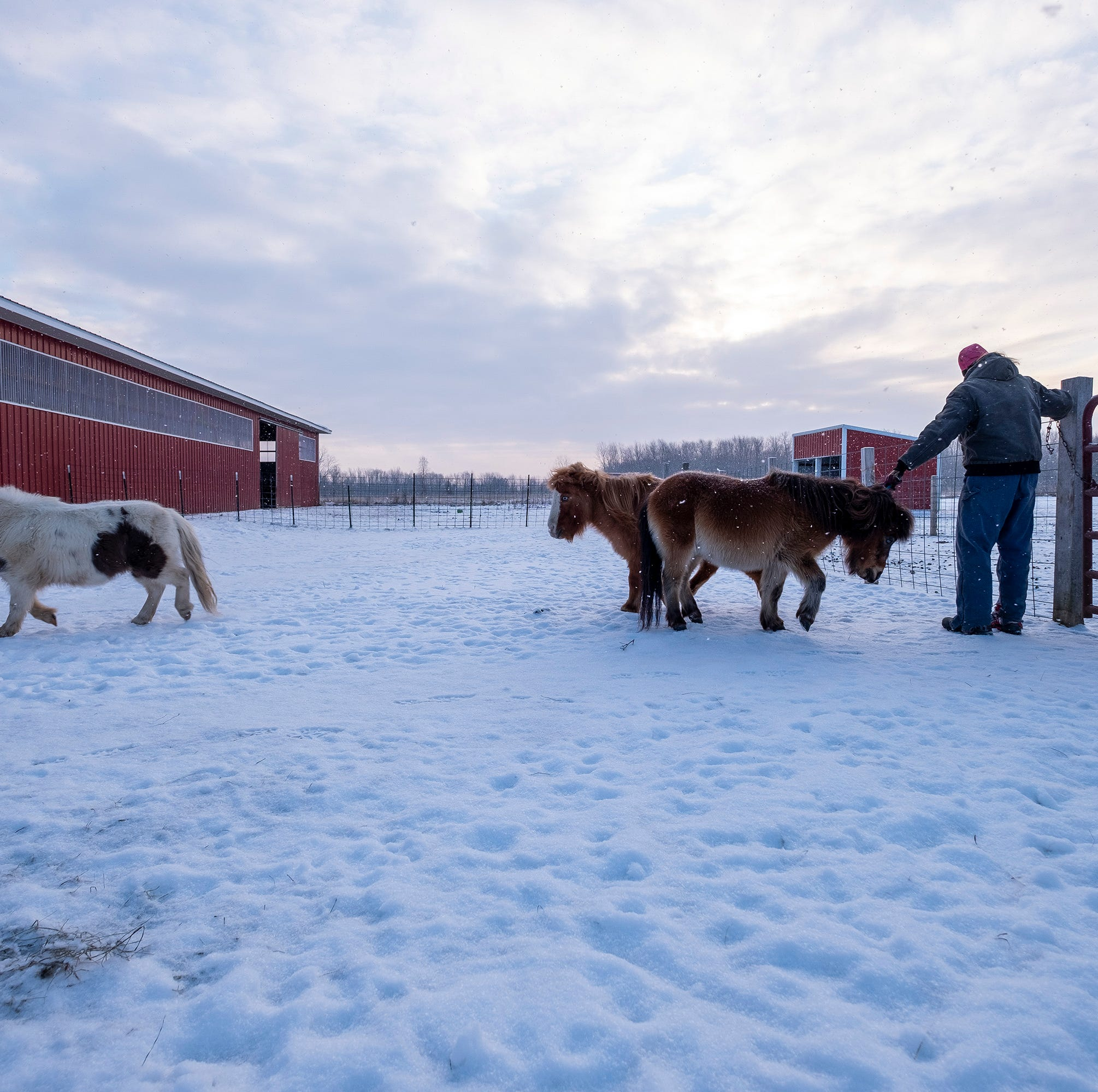 Emmett Twp. rescue gives miniature horses second chance