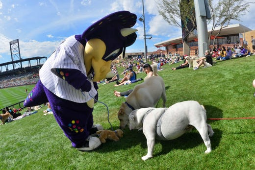 March 6: Dogs investigate a plush dog held by Rockies Dinger.