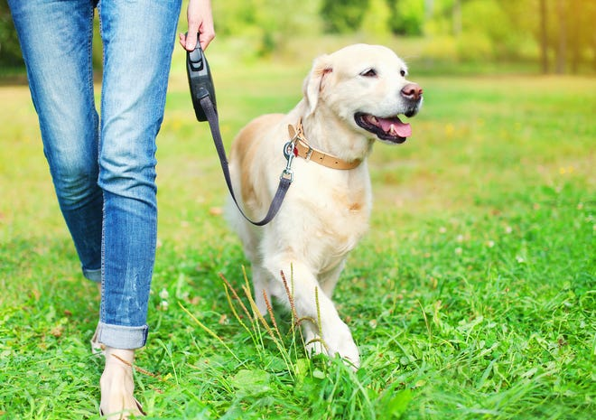 A study published Wednesday suggests seniors who walk dogs on leashes could raise their risk of getting injured.