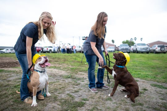Animal Medical Corpus Christi employees and dogs in construction hats wait for the groundbreaking of their new 9,500-square-foot facility at 6822 Everhart Road on Friday, March 8, 2019.