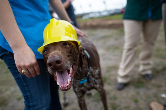 Copper the dog wearing a plastic construction hat stands along with guests before the groundbreaking for the Animal Medical Corpus Christi's new 9,500-square-foot facility on Friday, March 8, 2019.
