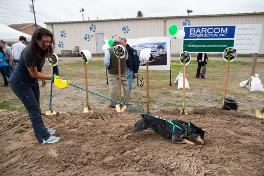 Coco the dog digs a hole in the after the groundbreaking for the Animal Medical Corpus Christi's new 9,500-square-foot facility on Friday, March 8, 2019.