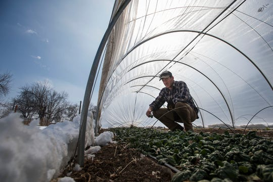 Raisin' Roots Farm owner Ben Pfeffer looks through a row of spinach inside a greenhouse on Thursday, March 7, 2019, at Raisin' Roots Farm in Fort Collins, Colo.